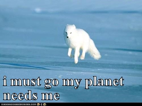 animals fox hover i must go my planet needs me - 5550085632