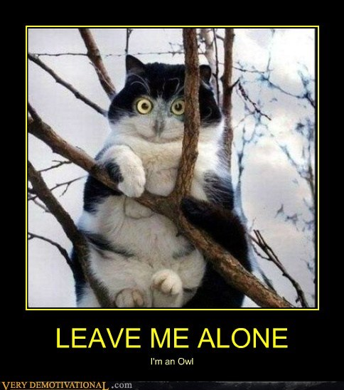 alone animals cat hilarious Owl - 5550256640