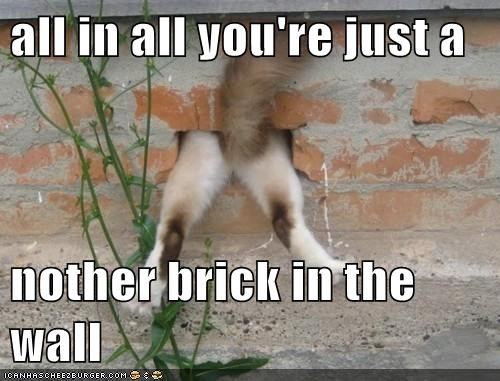 animals,another brick in the wall,brick,cat,I Can Has Cheezburger,oops,pink floyd,stuck