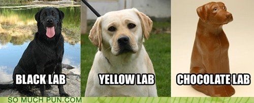 black,chocolate,color,coloring,double meaning,lab,labrador,literalism,modifier,prefix,yellow