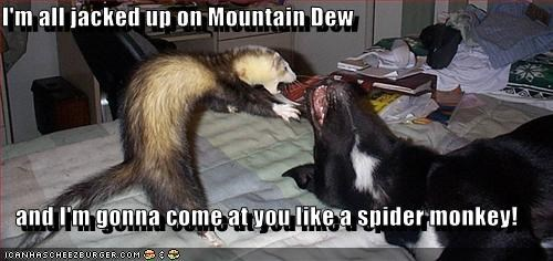 I M All Jacked Up On Mountain Dew And I M Gonna Come At You Like A Spider Monkey Cheezburger Funny Memes Funny Pictures