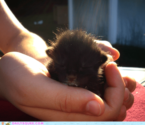 baby,cat,food,full,itty bitty,kitten,noms,reader squees,sleepy,tiny