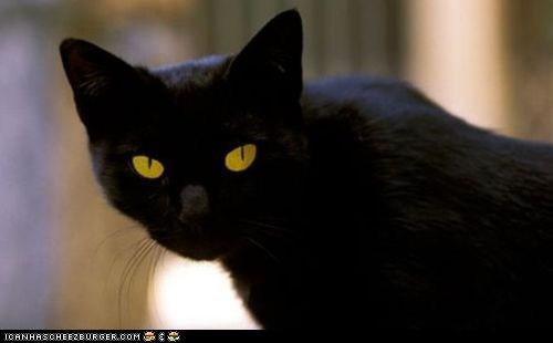 crazy cat lady inheritance Italy money news rich Tommaso - 5553312256