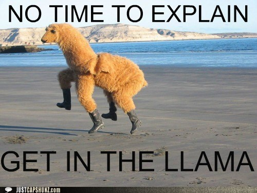 best of the week bizarre costume Hall of Fame llama no time to explain wtf - 5553352448