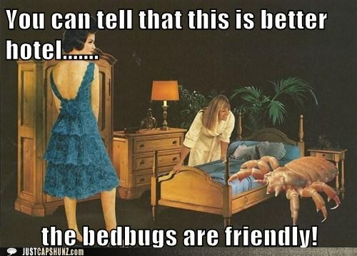 bed bugs,bugs,caption contest,cuddly new pet,gross,hotel,mixed media