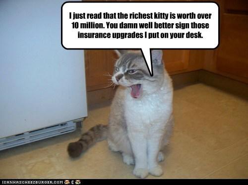 10 caption captioned cat demand desk insurance just million more than paperwork read richest sign worth - 5554098432
