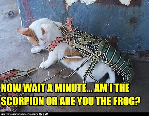 NOW WAIT A MINUTE... AM I THE SCORPION OR ARE YOU THE FROG?