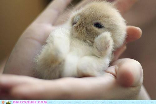 2011,Babies,baby,best of,Bunday,bunnies,bunny,gifs,happy bunday,rabbit,rabbits,Video