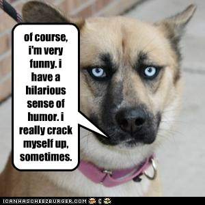 deadpan funny hilarious humor laugh laughter mixed breed mutt sense of humor