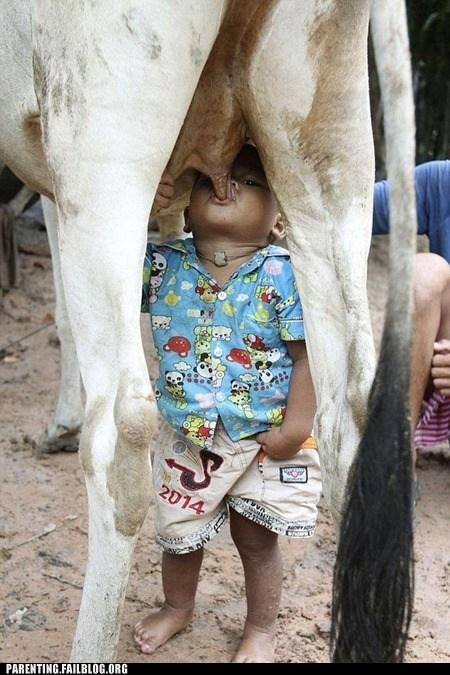 baby cow food milk nom nom nom Parenting Fail udder - 5554607104