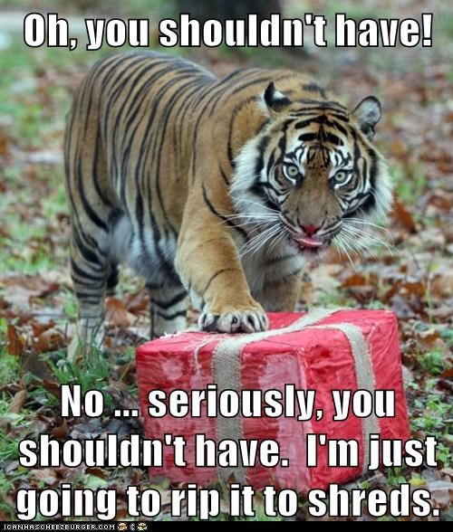 animals,christmas present,gift,oh-you-shouldnt-have,present,tiger,zoo