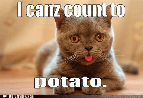 best of the week cat counting Hall of Fame I Can Has Cheezburger math potato smart - 5554987264