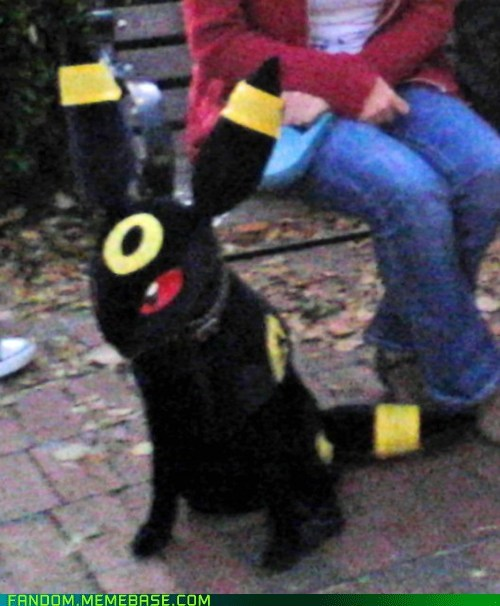 best of week cosplay dogs dog cosplay Pokémon umbreon - 5555214336