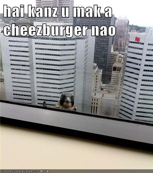 Cheezburger Image 5555379456