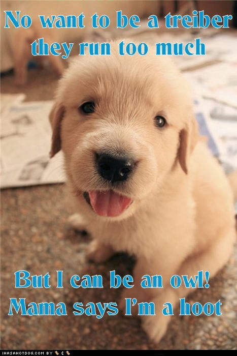 clever,clever puppy,funny,golden retriever,hilarious,no thanks,Owl,puppy,when I grow up