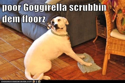chores,cinderella,clean,cleaning,goggirella,mixed breed,towel