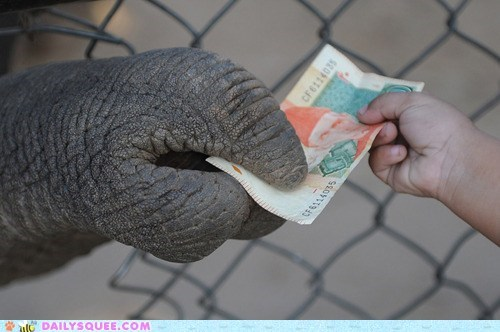 acting like animals,cash,compensation,dexterity,dexterous,elephant,grabbing,holding,money,peanuts,trick,trunk