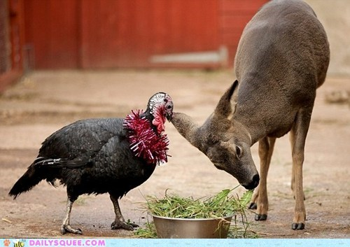deer friends friendship heartwarming Interspecies Love touching Turkey - 5555685632