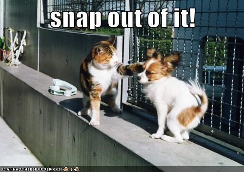 argument cat crazy disagreeable mean papillon slap snap out of it