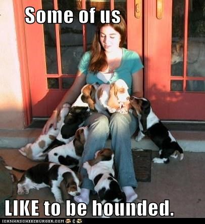 basset hound basset hounds best of the week Hall of Fame hounded human puppy puppy pile - 5556937728