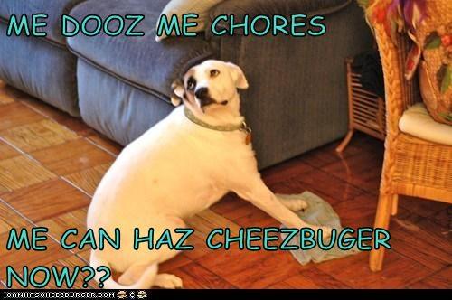 Cheezburger Image 5557185792