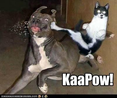 cat dogs fight kapow karate ninja