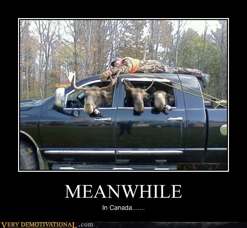 Canada hilarious Meanwhile moose wt - 5557305344
