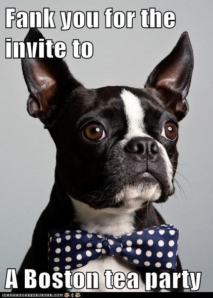 best of the week boston tea party boston terrier bow tie class act classy fancy Hall of Fame tea tie - 5558148864