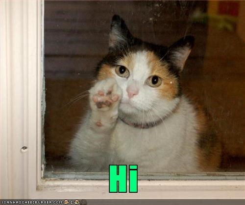 caption captioned cat hi paw wave waving window - 5558486784