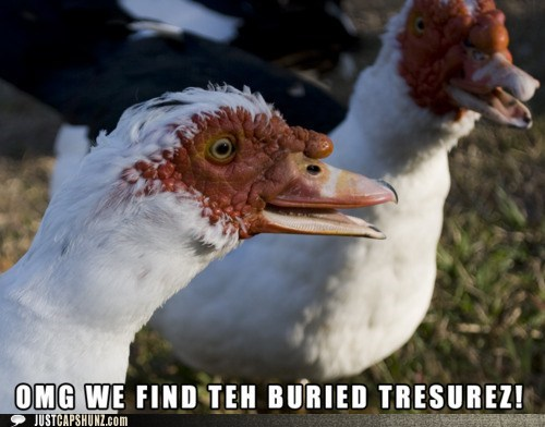 animals burried treasure geese happy treasure