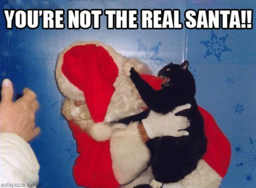 angry attack cat kitteh pet santa scratch - 5558948864