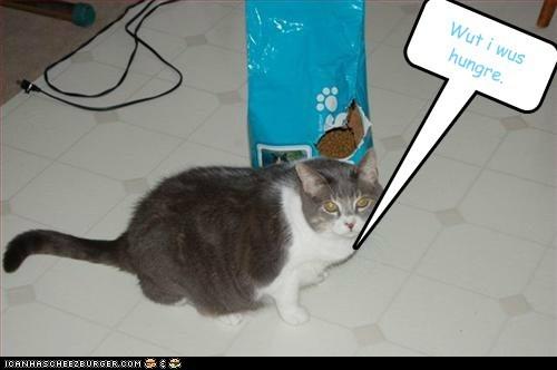 Cheezburger Image 5558956544