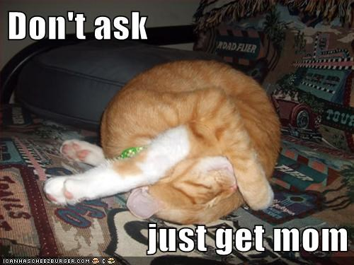 ask ball borked caption captioned cat dont get just kitten mom stuck tabby upside down - 5558975488