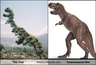 dinosaur funny Hall of Fame TLL tree tyrannosaurus rex - 5559352576