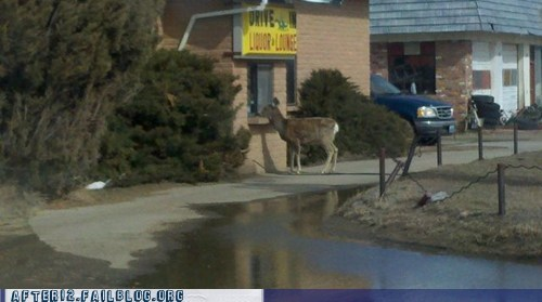 crunk critters,deer,liquor store,usual