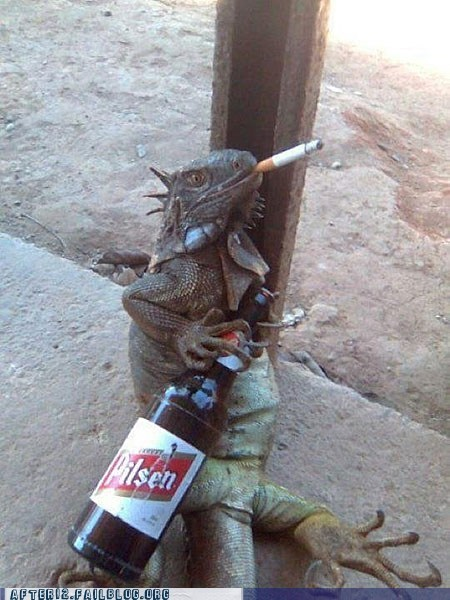 beer crunk critters drinking iguana lizard smoking thug life - 5560017152