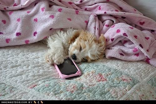asleep cyoot puppeh ob teh day iphone phone phone call puppy sleeping telephone - 5560230656