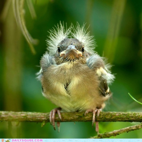 baby back to the future bird chick comparison doc whatsit whatsit wednesday - 5560465664