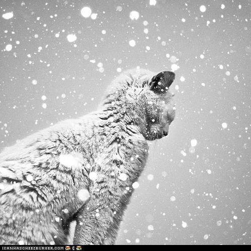 advent calendar christmas cyoot kitteh of teh day snow snowing weather winter
