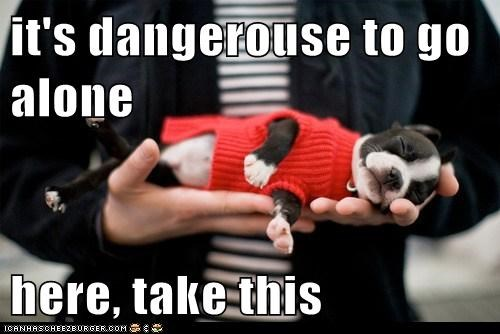 adorable boston terrier its-dangerous its dangerous to go alone palm of hand puppy take this - 5560513280