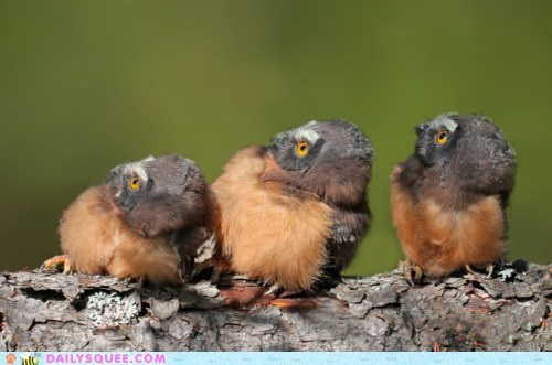 Owlets in Awe