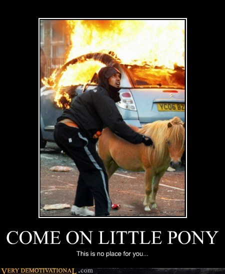 wtf pony riot dangerous funny - 5560651520