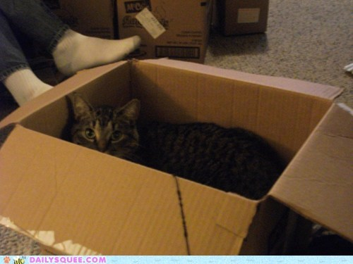 box,cat,habitat,natural,possessive,protective,reader squees