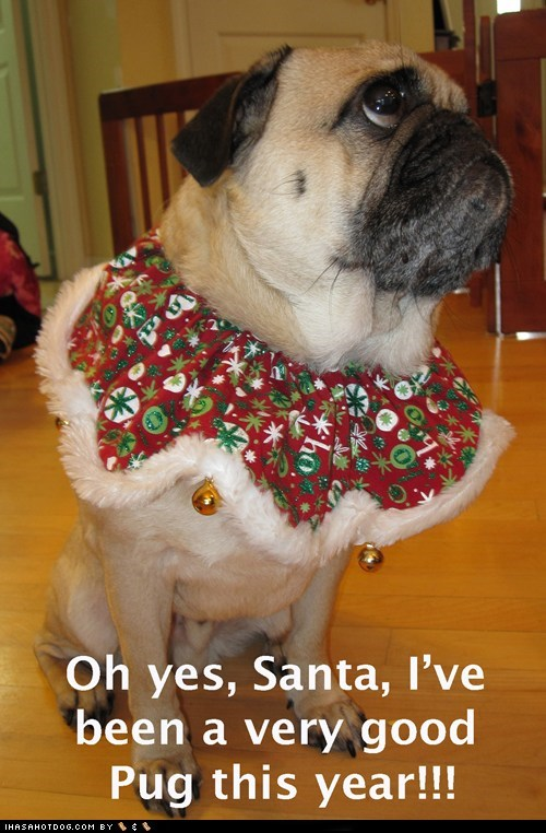 best of the week christmas good dog good pug Hall of Fame ive-been-good-this-year pug santa santa claus - 5561073408