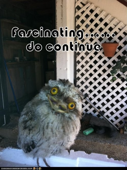 animals awesome do continue dont-care fascinating IDGAF Owl who cares