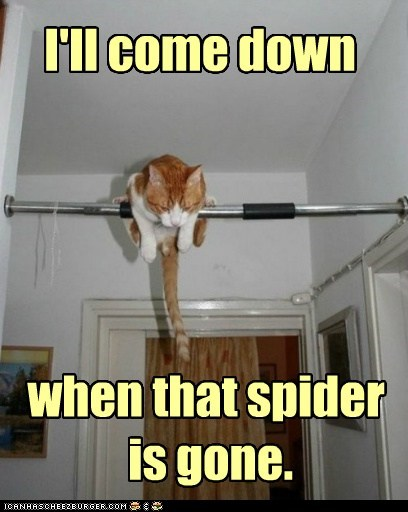 afraid,after,caption,captioned,cat,come,condition,cowering,do not want,down,gone,i will,spider,tabby