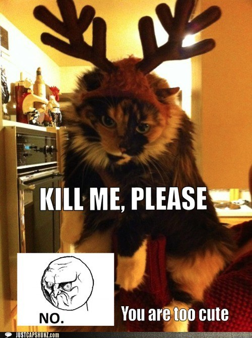 adorable,adorbz,awww,cat,christmas,cute,I Can Has Cheezburger,no,reindeer,reindeer costume,so cute