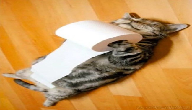cats and toilet paper