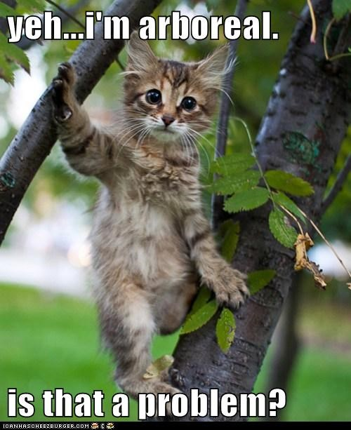 adorable,animals,arboreal,awesome,cat,I Can Has Cheezburger,kitten,tree