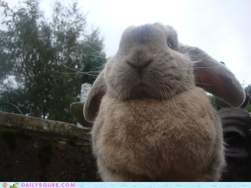 bunny Fluffy happy bunday observation poofy rabbit reader squees - 5563375104